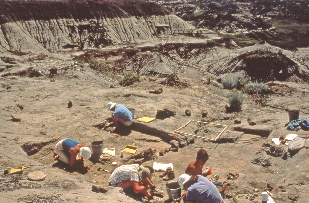 Excavation of the Ceratopsian bonebed in 1984.  Areas were marked off in meter square grids and each meter excavated systematically, mapping all occurrences of bone.