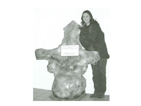 Argentinosaurus vertebra. too big.