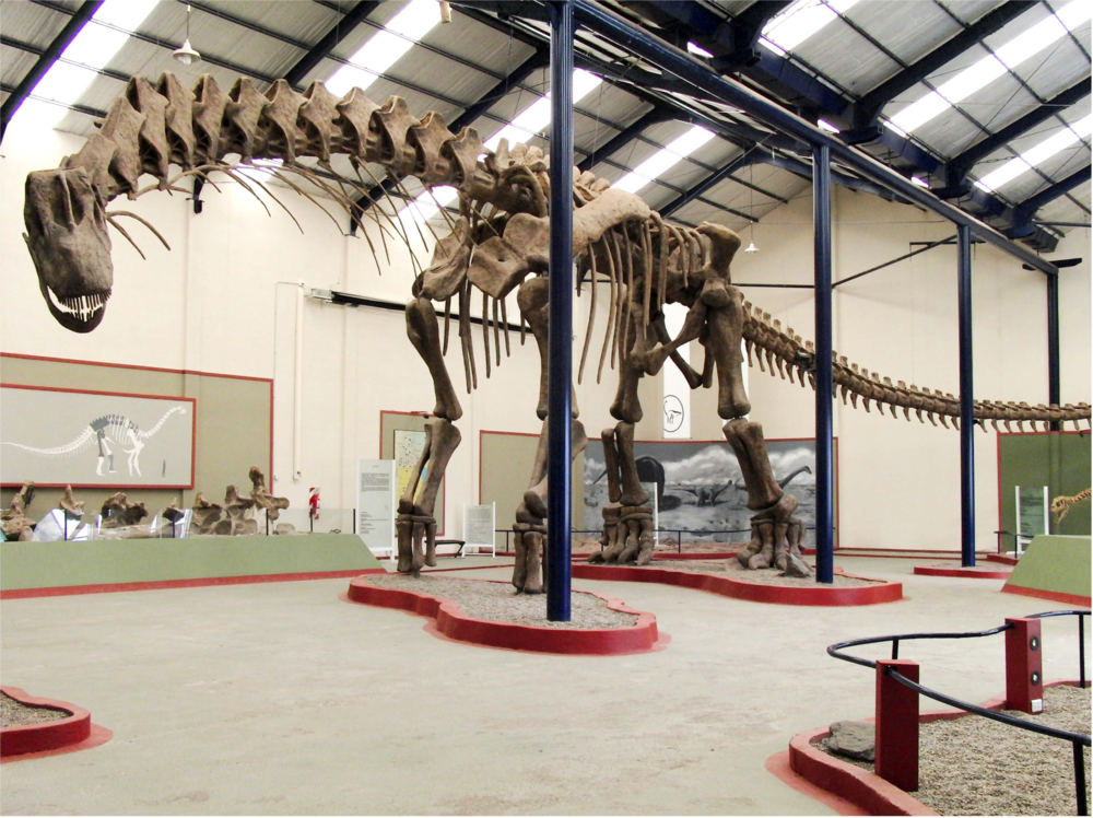 Argentinosaurus reconstruction from Museo Municipal Carmen Funes in Argentena, which Sellers et al photographed