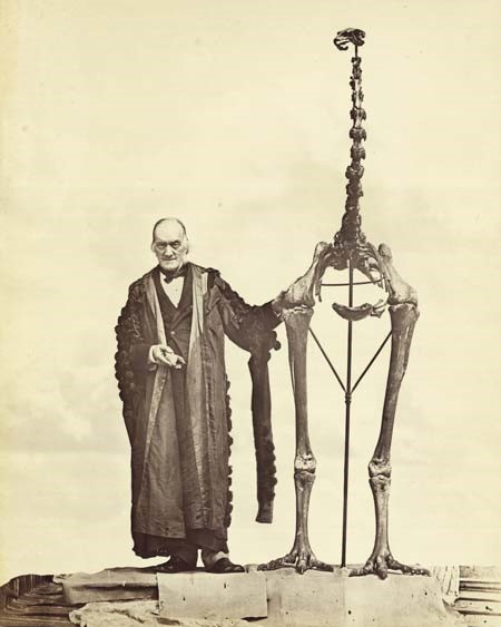 Richard Owen inferred the existence of a moa from a single leg in 1839. Here he is an older man with the complete skeleton of Dinornis robustus, vindicated. Vindicated, but it's worth noting that moa totally wouldn't stand like that.