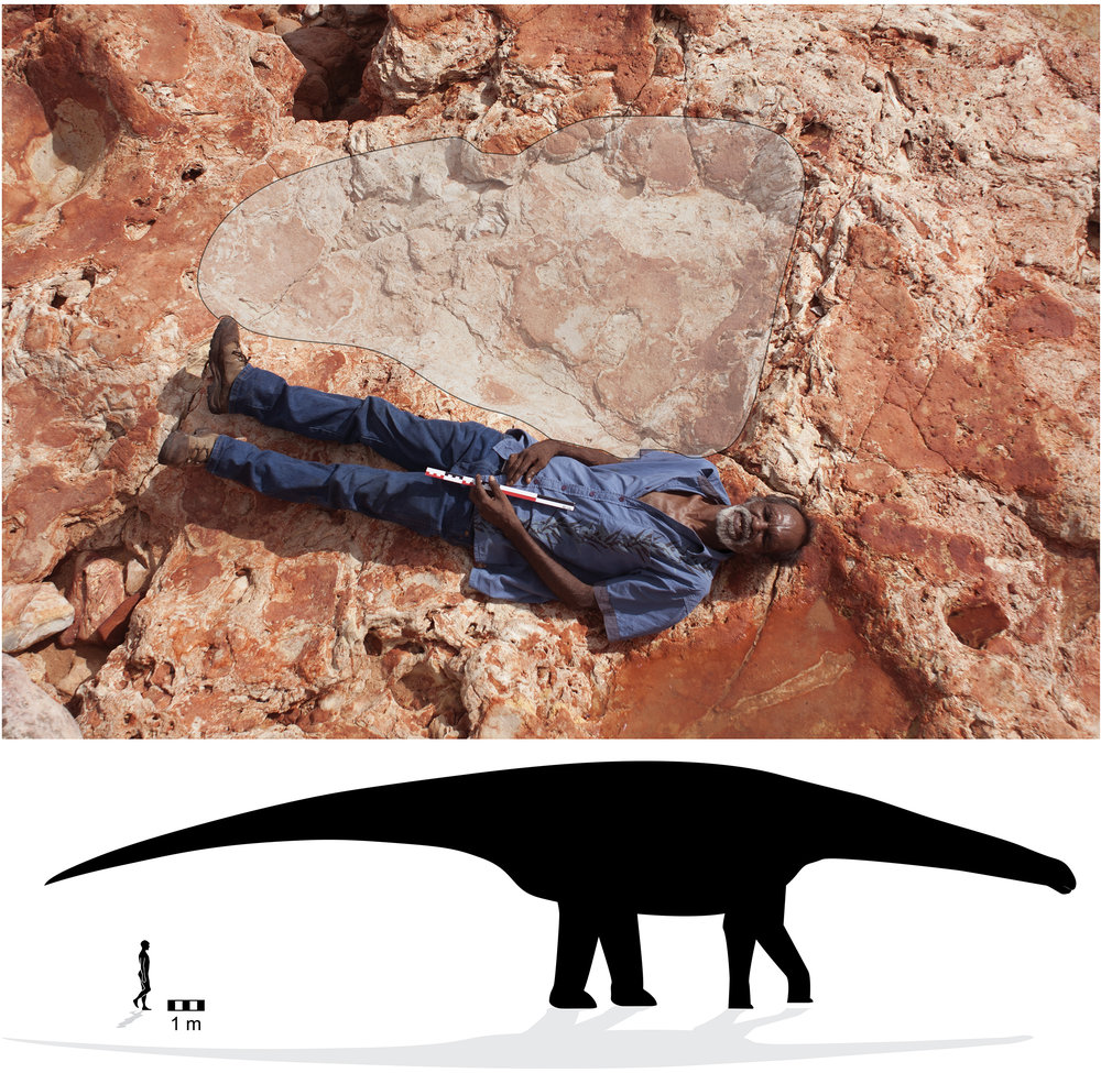 "The world's largest known dinosaur track (top), provisionally attributed to the mellifluously-named taxon ""Broome Sauropod Morphotype A."" From Salisbury,  et al  (2016)."