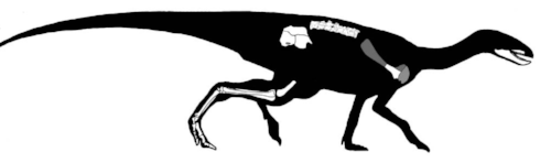 We have just one specimen of Pisanosaurus, and the remains are incomplete. For example, though we have a lower jaw, we don't have the complete skull. Also, good luck trying to figure out whether that is a lizard-like hip or a bird-like hip.