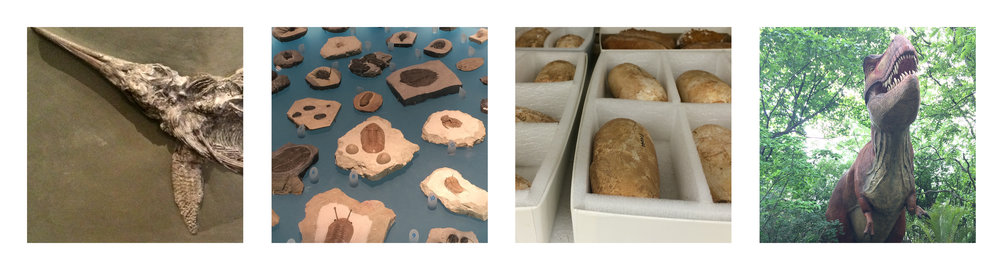 Paleontological specimens. Ok, one of these is not actually a fossil specimen. All pics in this post by author.
