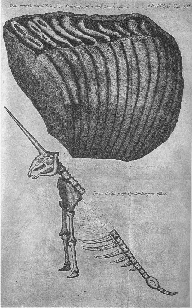 Mammoth molar and a hypothetical reconstruction of a unicorn skeleton, from G. W. Leibniz,  Protogaea ;  or, On the Primitive Aspect of the Earth and On the Traces of the Most Ancient History Contained in the Monuments of Nature , ed. Christian Ludwig Scheidt, 1749.