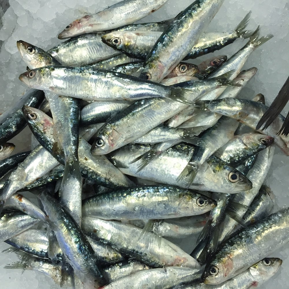 Sardines on the counter at  Source Food Hall and Cafe .   Image: Paul Burton
