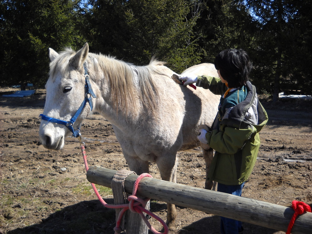 Sunny Crest Youth Ranch Animal Assisted Program