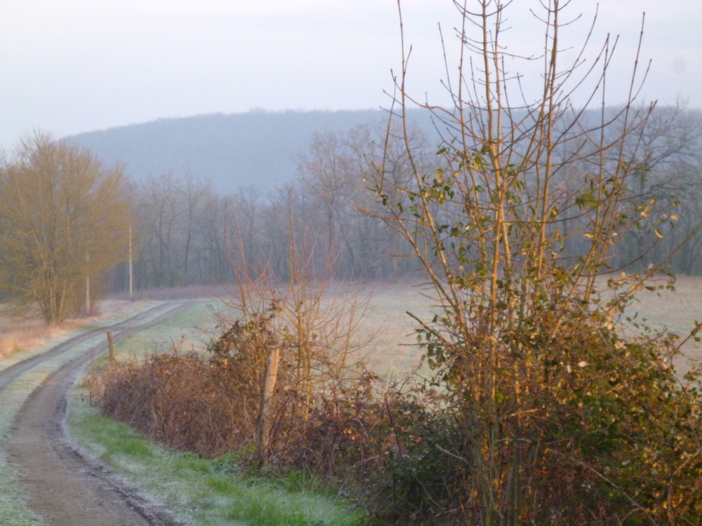 Frosty morning. The drive up to the Farmhouse. 01/03/16