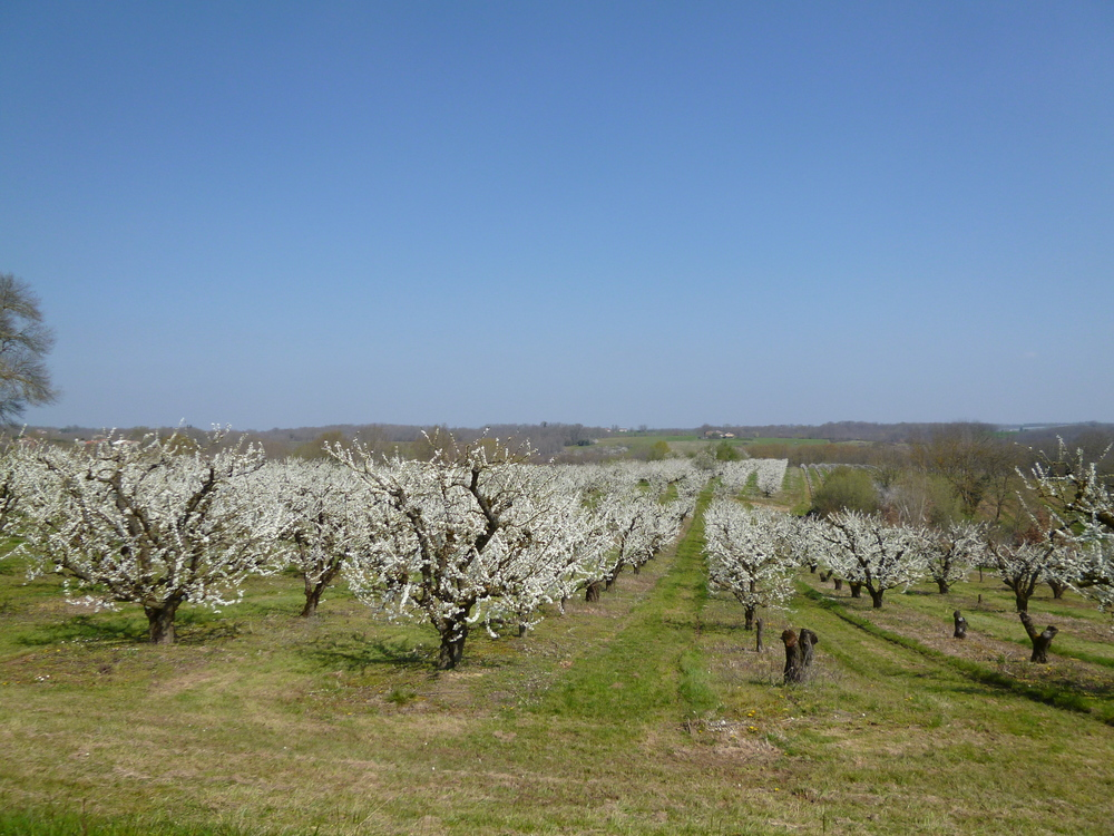 Blossom time in Tarn et Garonne.