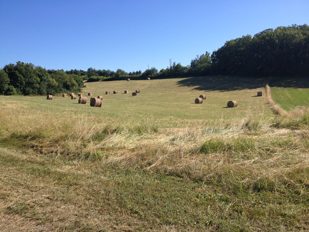 Twenty one bales of hay! ( well twenty, one is out of shot).