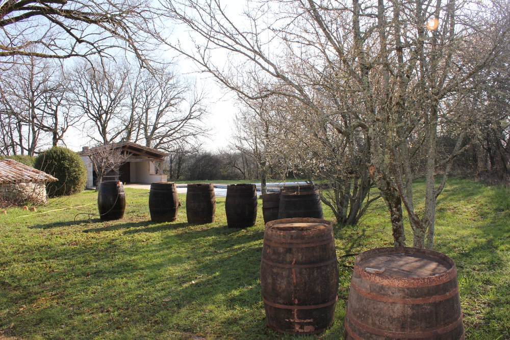 In February we finally got the barrels out of the barn and did a bit of jet washing. They are now in use in the grounds, my particular favourite role for them is as herb planters for the parsley, sage, rosemary and thyme.