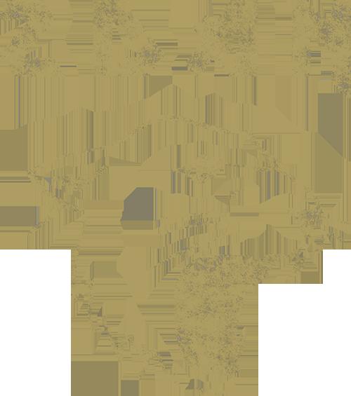 Zdan-Web.png