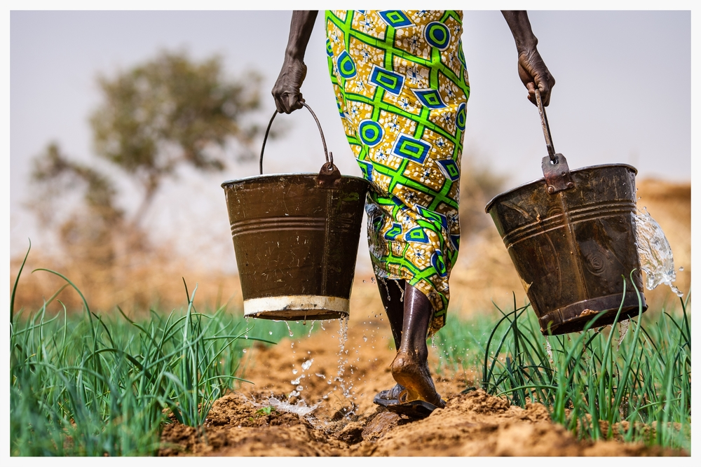 Subsistence farmer Habibou Kiendrebeogo walks across her small plot of land carrying water for her onions. Photo: © Marcus Perkins