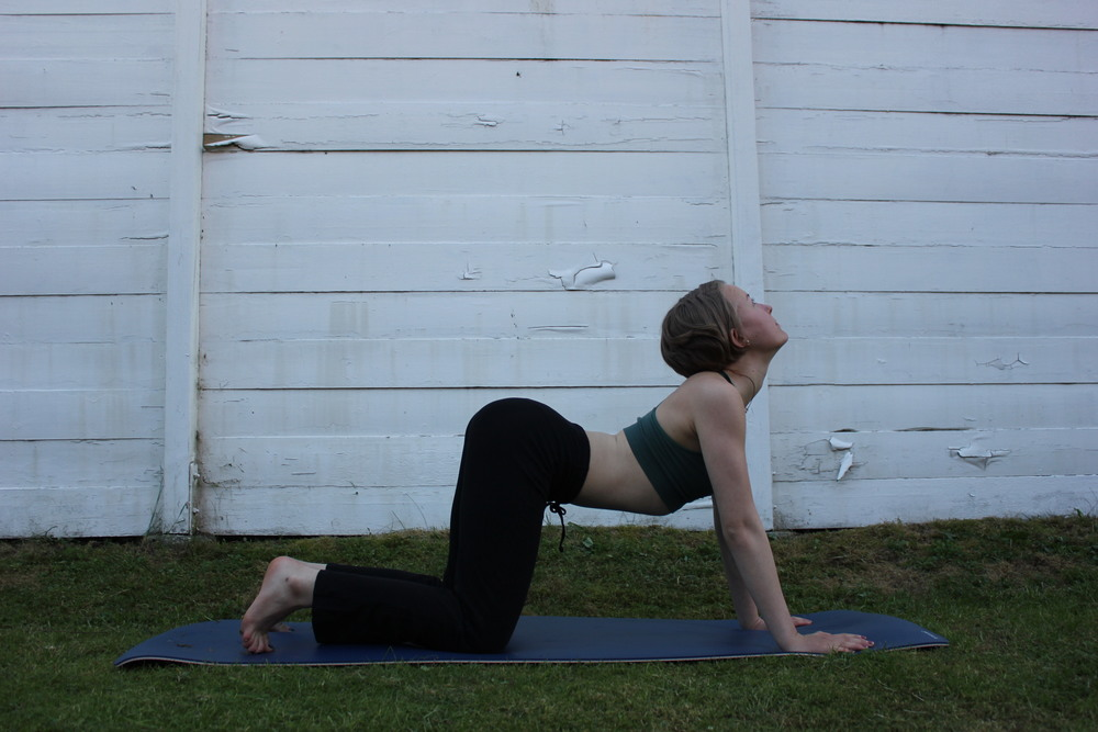 Cow pose:  Curl your toes under. Inhale and bend your back to the ground and look up