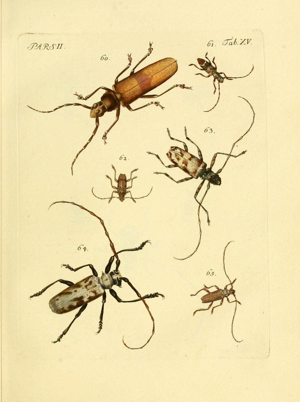 J.E. Voet. M Doct. Catalogus systematicus coleopterorum. À la Haye :Chez G. Bakhusen,[1804]-1806.