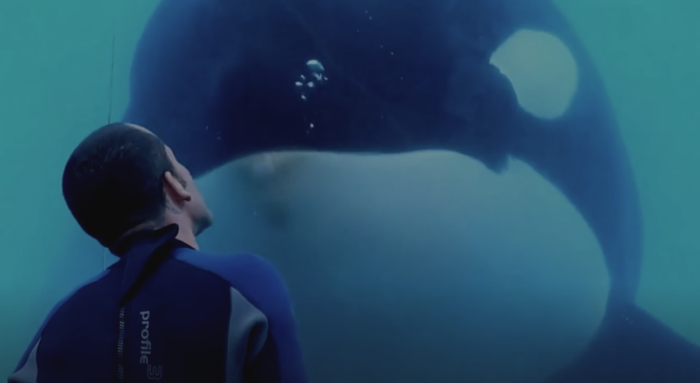 "Screenshot from the official trailer to ""Blackfish""."