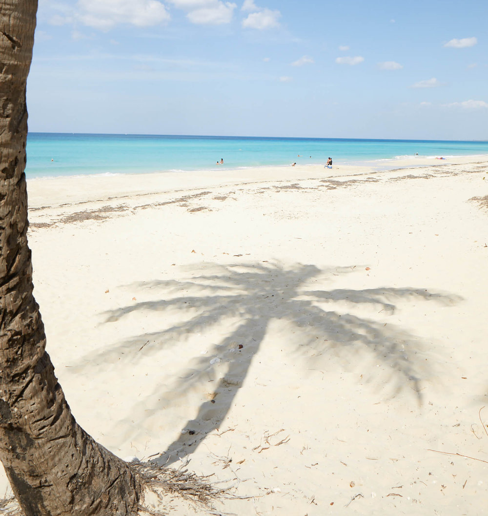 Cuba_Candela_Palm_Tree_Beach.jpg