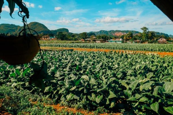 vinales_valley_cuba_landscape_tobacco_fields_mogotes.jpg