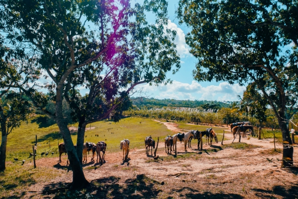 vinales_valley_cuba_tobacco_country_on_horseback.jpg