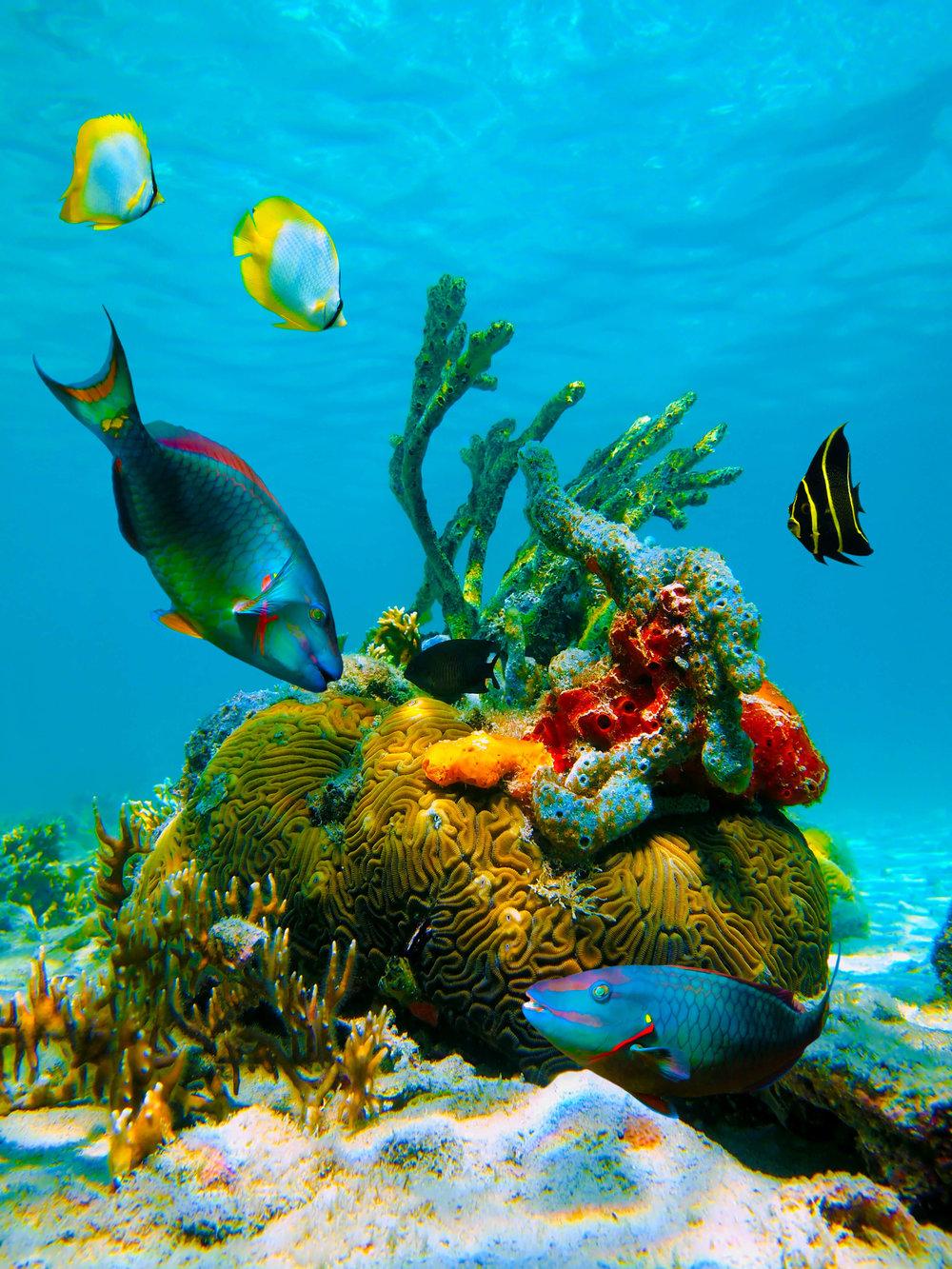 Dive in Pristine Underwater Worlds