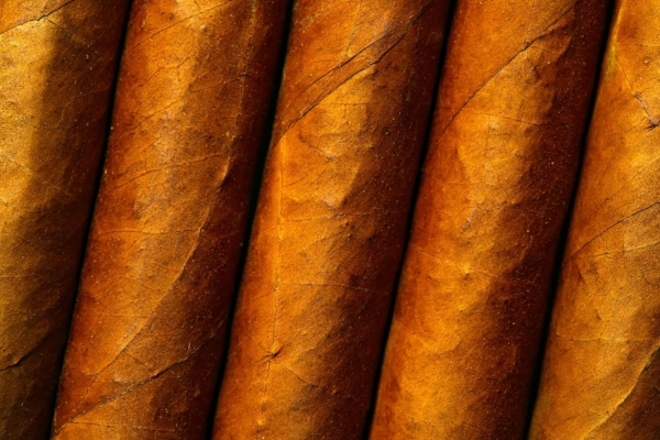Cuban cigar wrapper details
