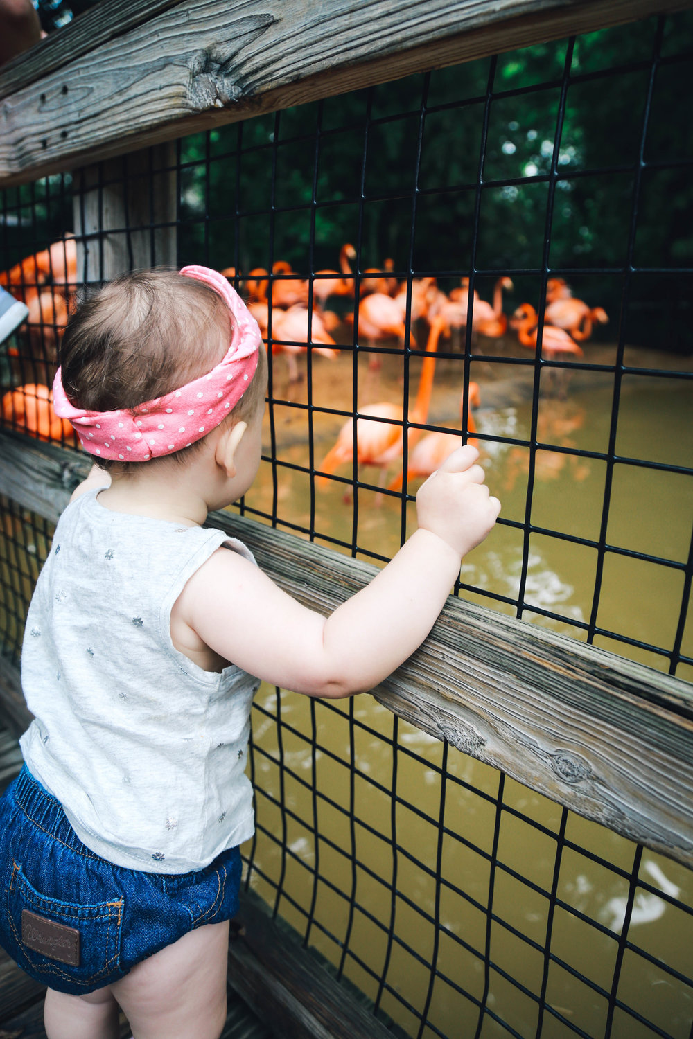 Rosie Zoo (3 of 17).jpg