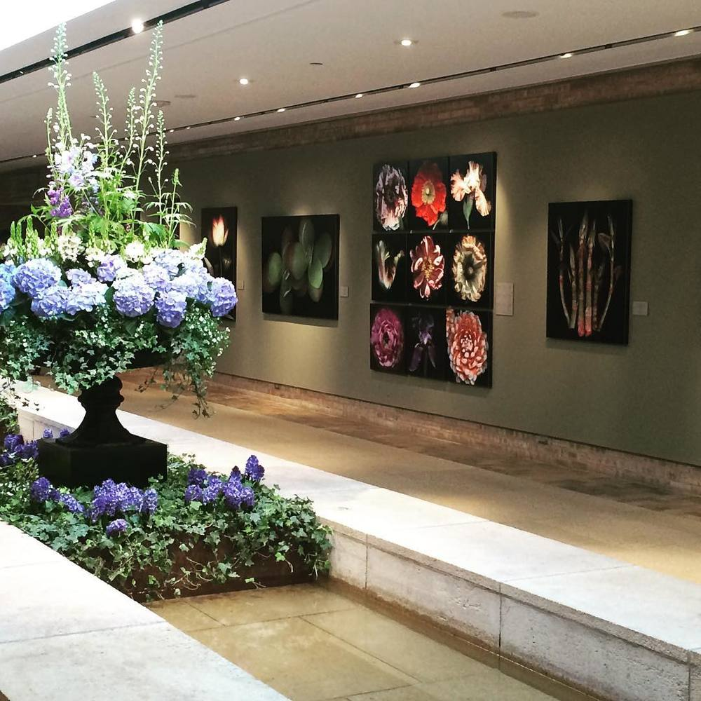 The Botanicals: Intimate Portraits exhibit at the Regenstein Center. Photo by Laurie Tennent on Instagram.