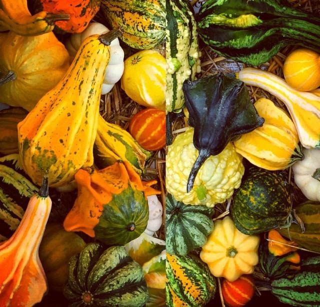 Autumnal pumpkins- Sarah Keelty.jpg