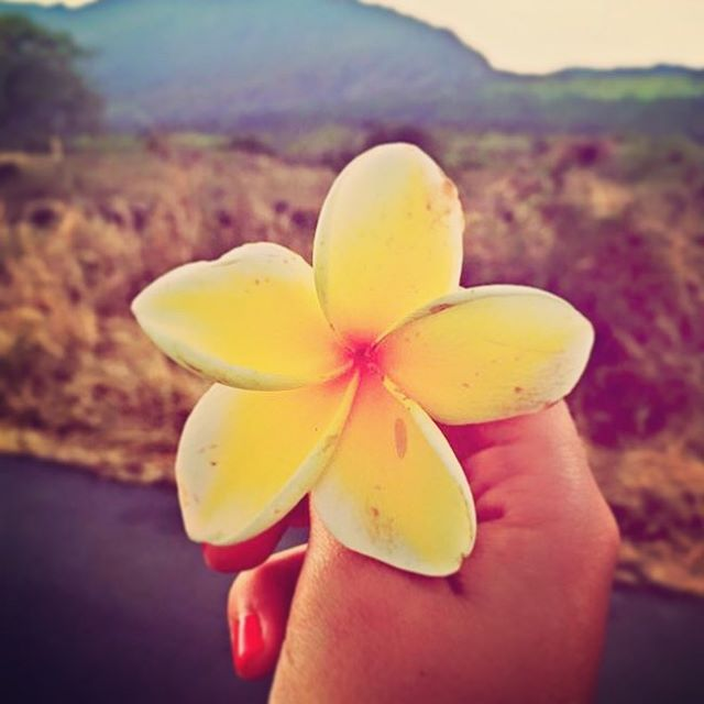 Stop & smell the plumeria! The R2H adventure is full of towering waterfalls, massive cliffs & winding roads. But don't forget to take in & discover the tiniest of details. This is a world of beauty in both the great and small. #r2h #maui #hawaii #beauty #roadtrip #hana #plumeria #roadtohana
