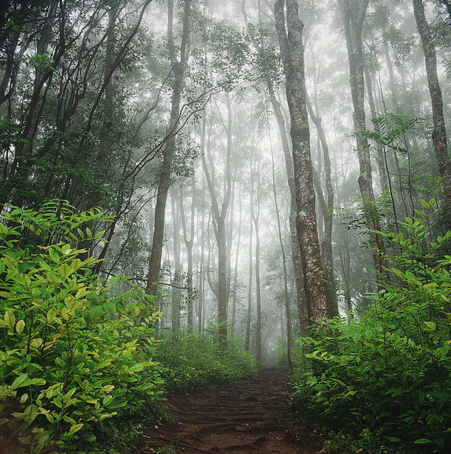The forest on the backside of the Road to Hana is both mysterious and charming.