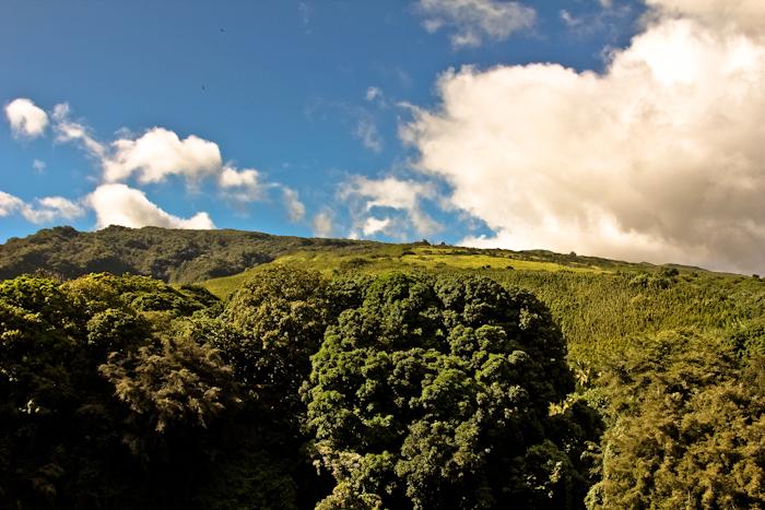 #1 color combo on Maui: blue sky and green rain forest. #adventure #romance #hana