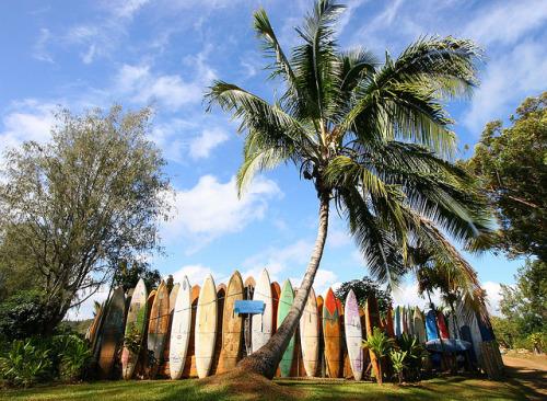 Surfing day.