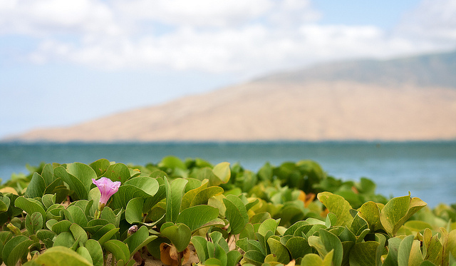 fadingimpressions: Kihei Dunes on Flickr. Via Flickr: Facing the northern part of Maui. Listening to: Theory Of A Deadman - Lowlife