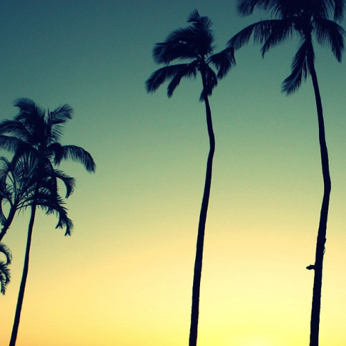 Sun going down… hearts are full… palms are silhouettes…