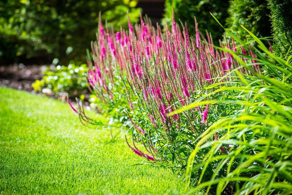 LANDSCAPING - CLICK HERE
