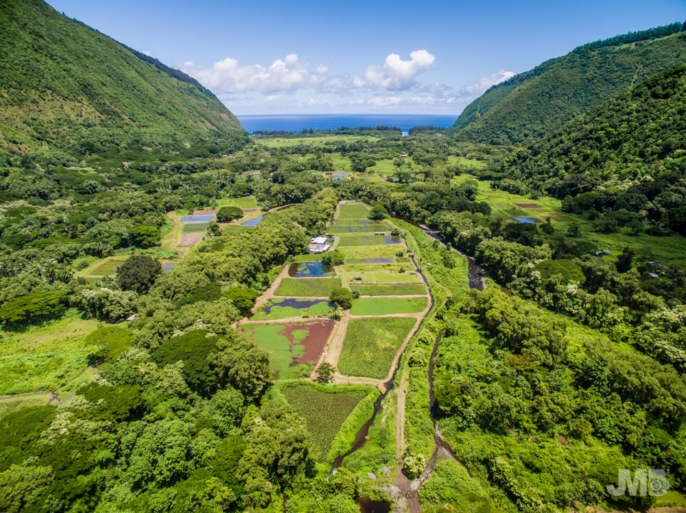 Aerial Photo of Hale O Kalo by Jake Marote