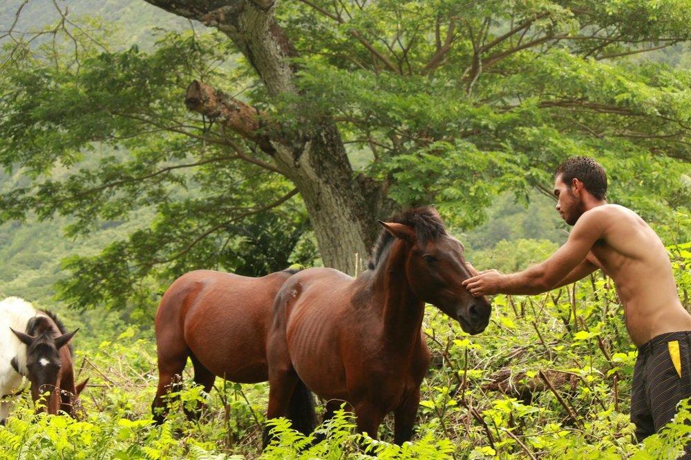 Horse Feeding.JPG