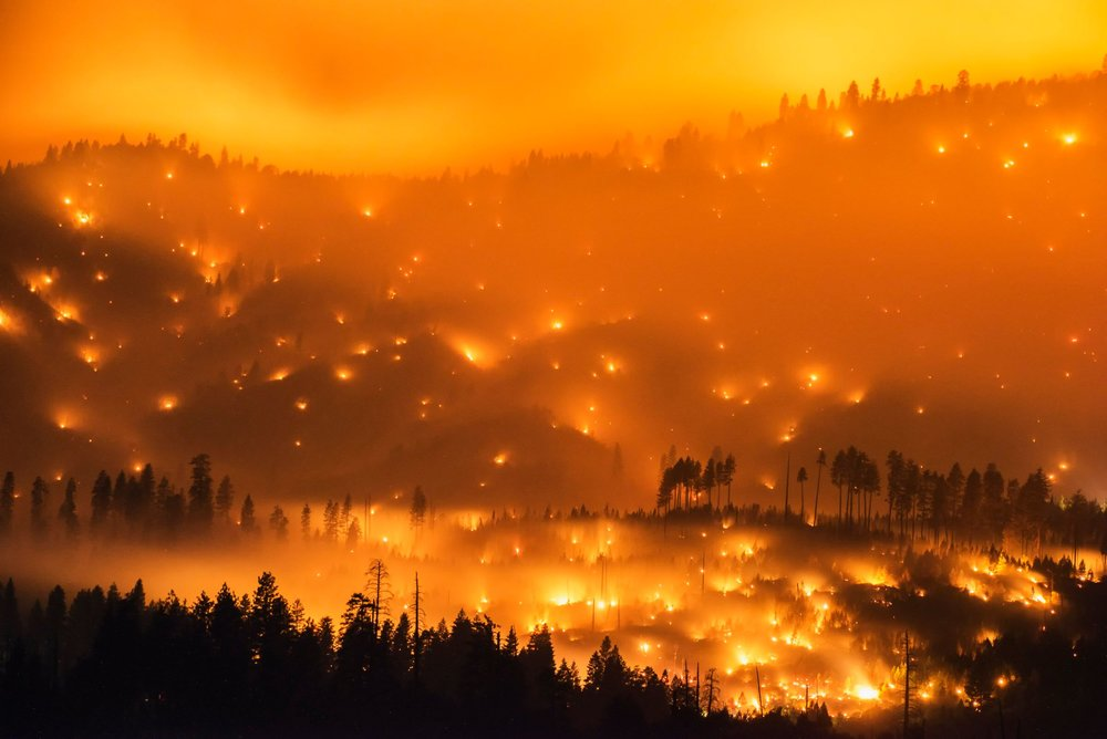 The El Portal Fire burns on a hillside in the Stanislaus National Forest and Yosemite National Park on Sunday evening July 27, 2014. Credit:  Stuart Palley