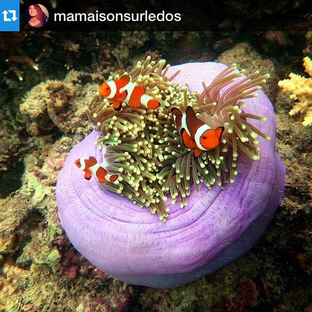 #Repost @mamaisonsurledos with @repostapp.