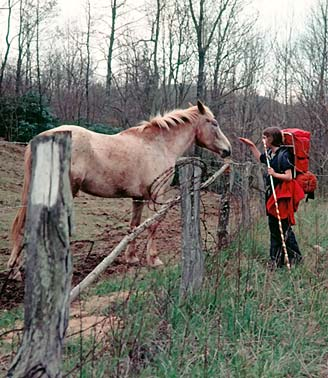 TENNESSEE PETTING HORSE