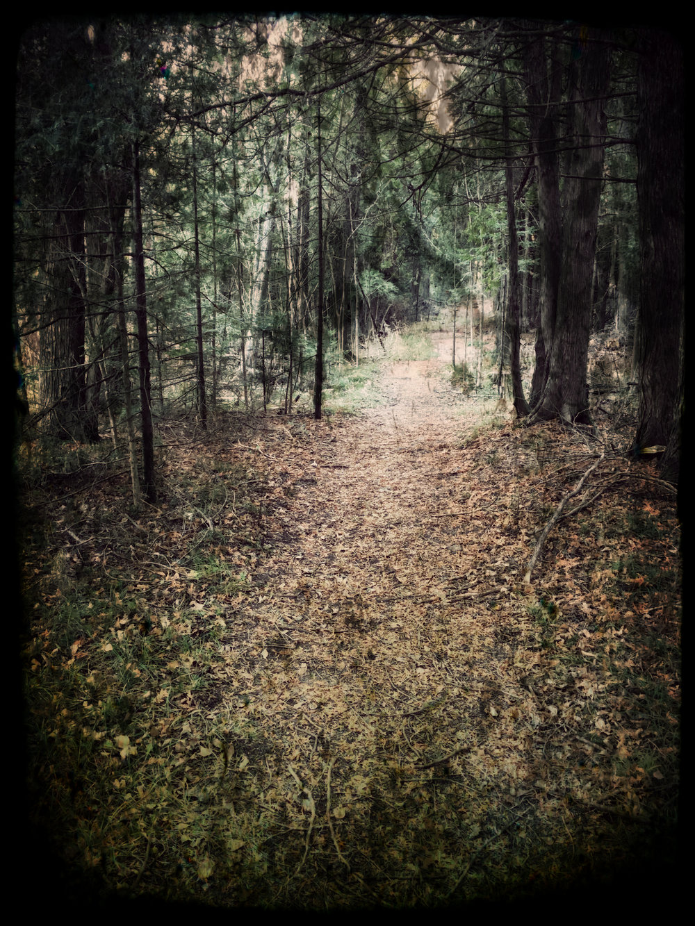 The Trail Out.jpg