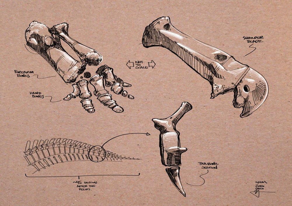 NHM_-_Triceratops_Details.jpg