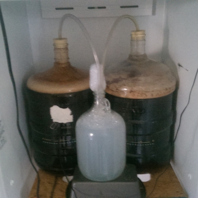 24 hours after pitching yeast, churning along nicely.