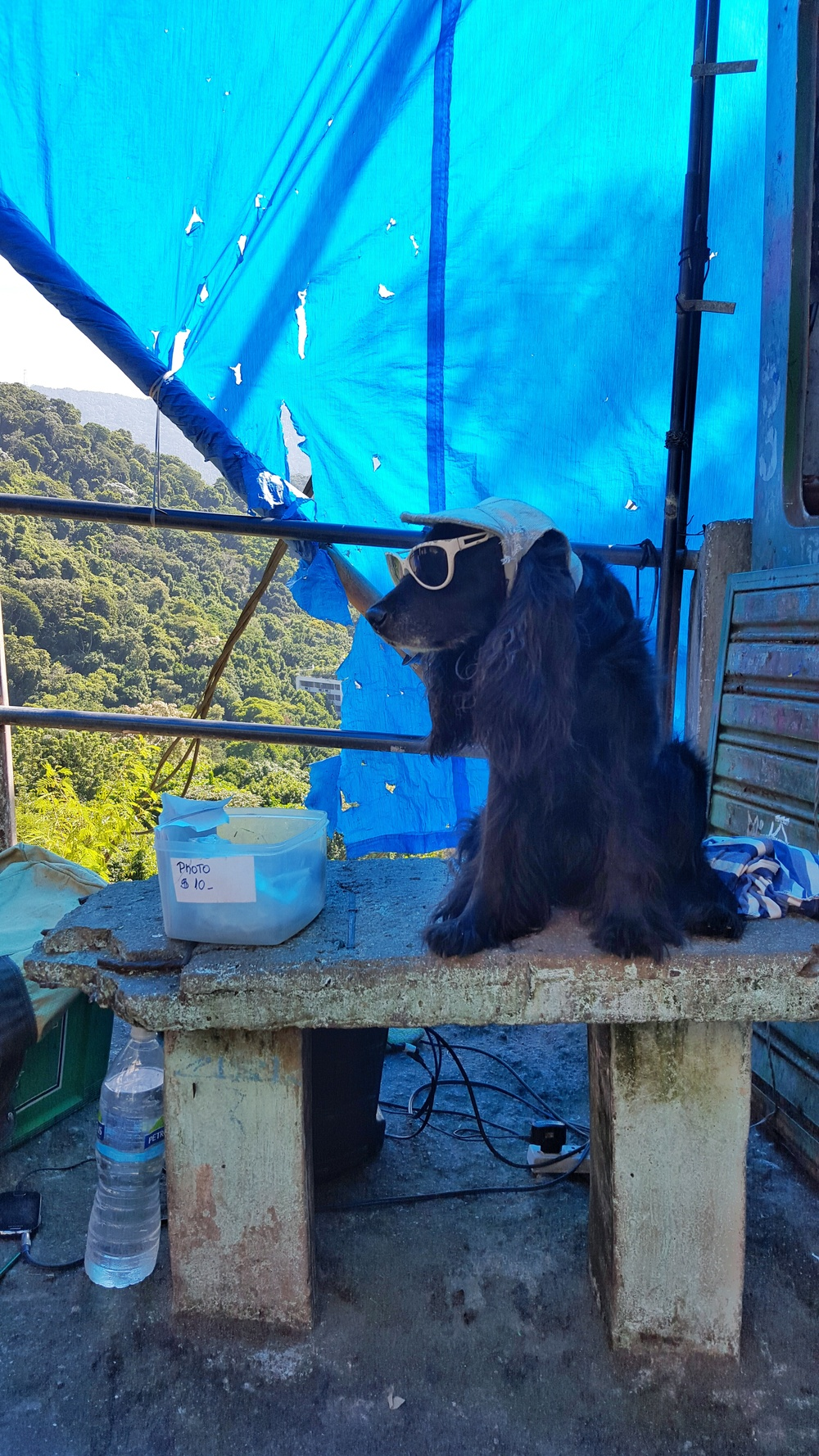 Dog at favela