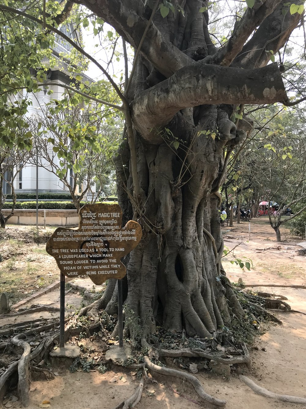 The Magic Tree that held a hanging speaker used to drown out screams of people being tortured and killed.