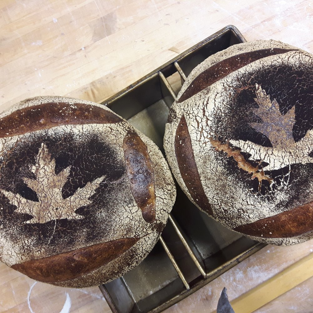 MapleLeaf Miche.jpg