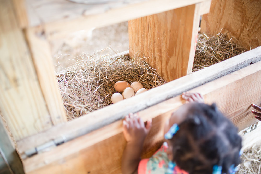 mcdowell farm school-6.jpg