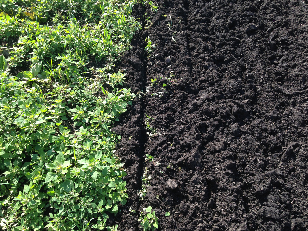 Black Dirt – see the difference?