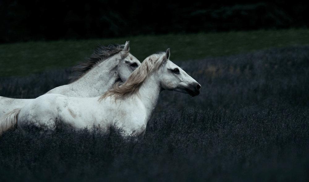 fine art equine photographer8.jpg