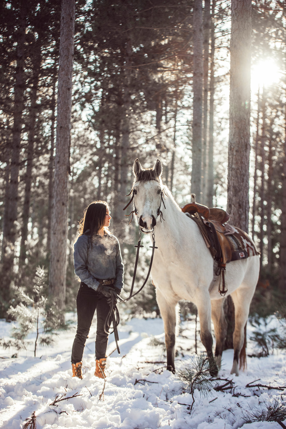 minnesota-equine-horse-photographer-5-reasons-why-you-need-a-winter-photoshoot-alyssa-smolen-photography.jpg