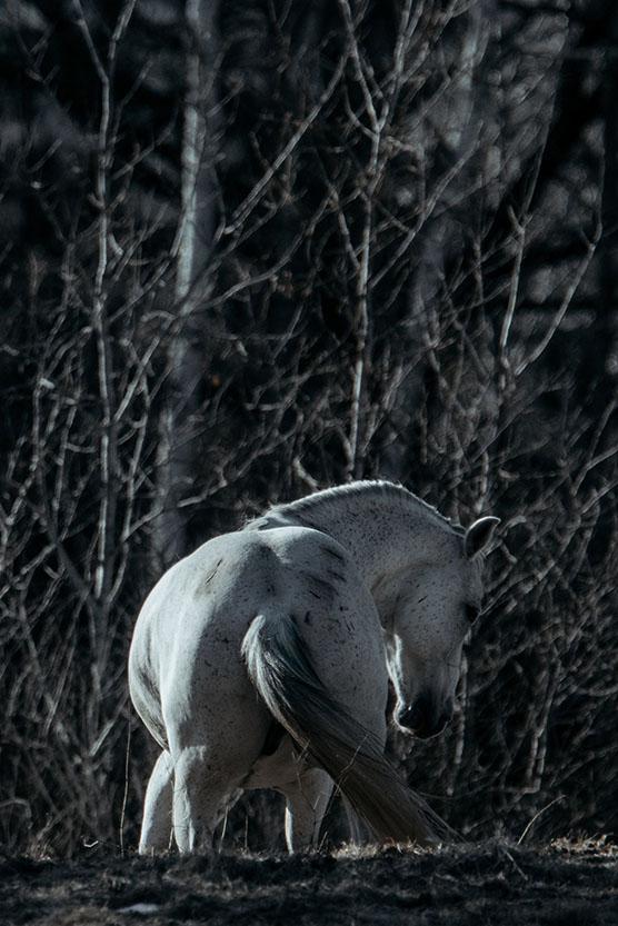minnesota-horse-equine-photographer-alyssa-smolen-photography23.jpg
